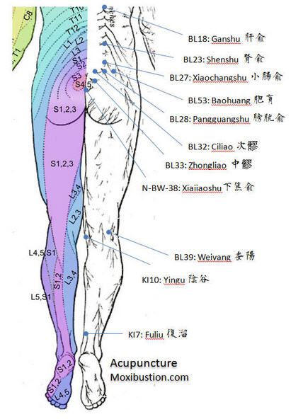 Urinary Acupuncture Points Back