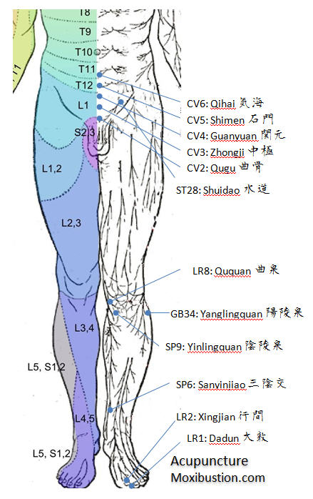 Urinary Acupuncture Points Front
