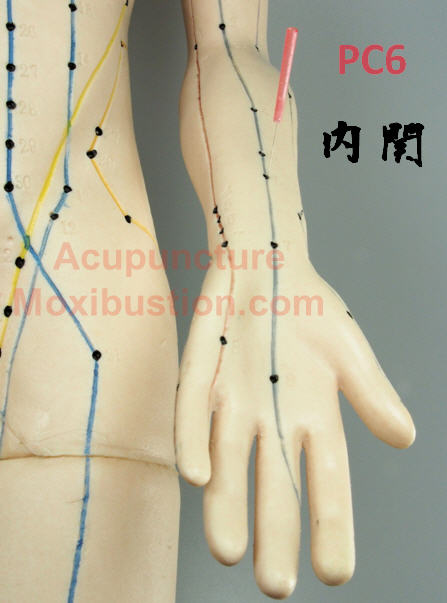 PC6 Acupressure Point - acupuncture model forarm