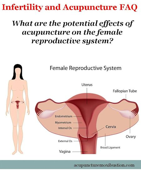 What are the potential effects of acupuncture on the female reproductive system 450w